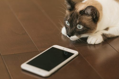 siri 使い方 iPhone